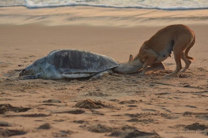 A Dead Turtle On The Beach